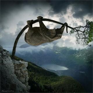 funny_elephant_photoshop_2.jpeg