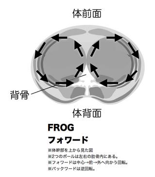 2.frog.jpg